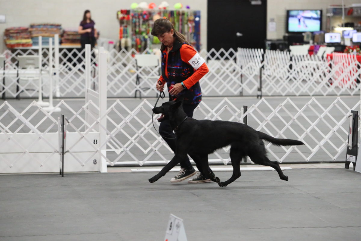 gsd-national-2016-242