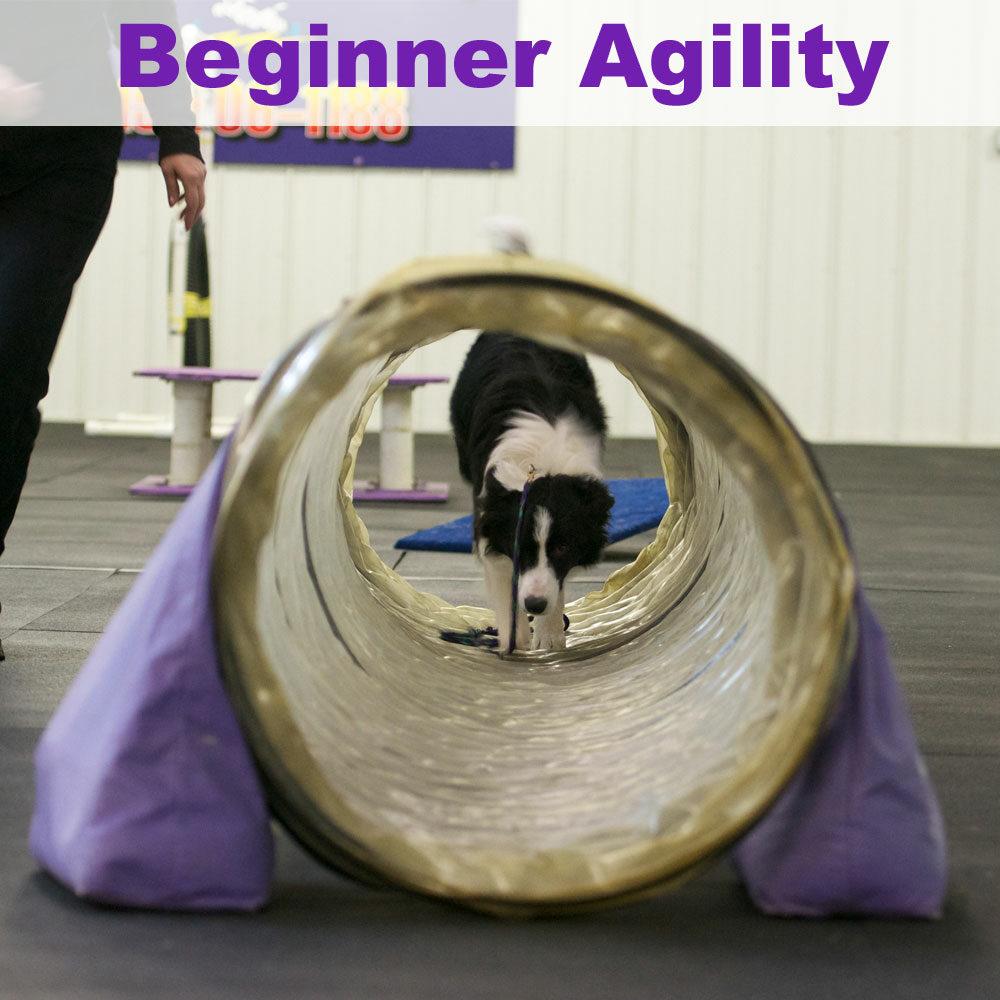 beginneragility