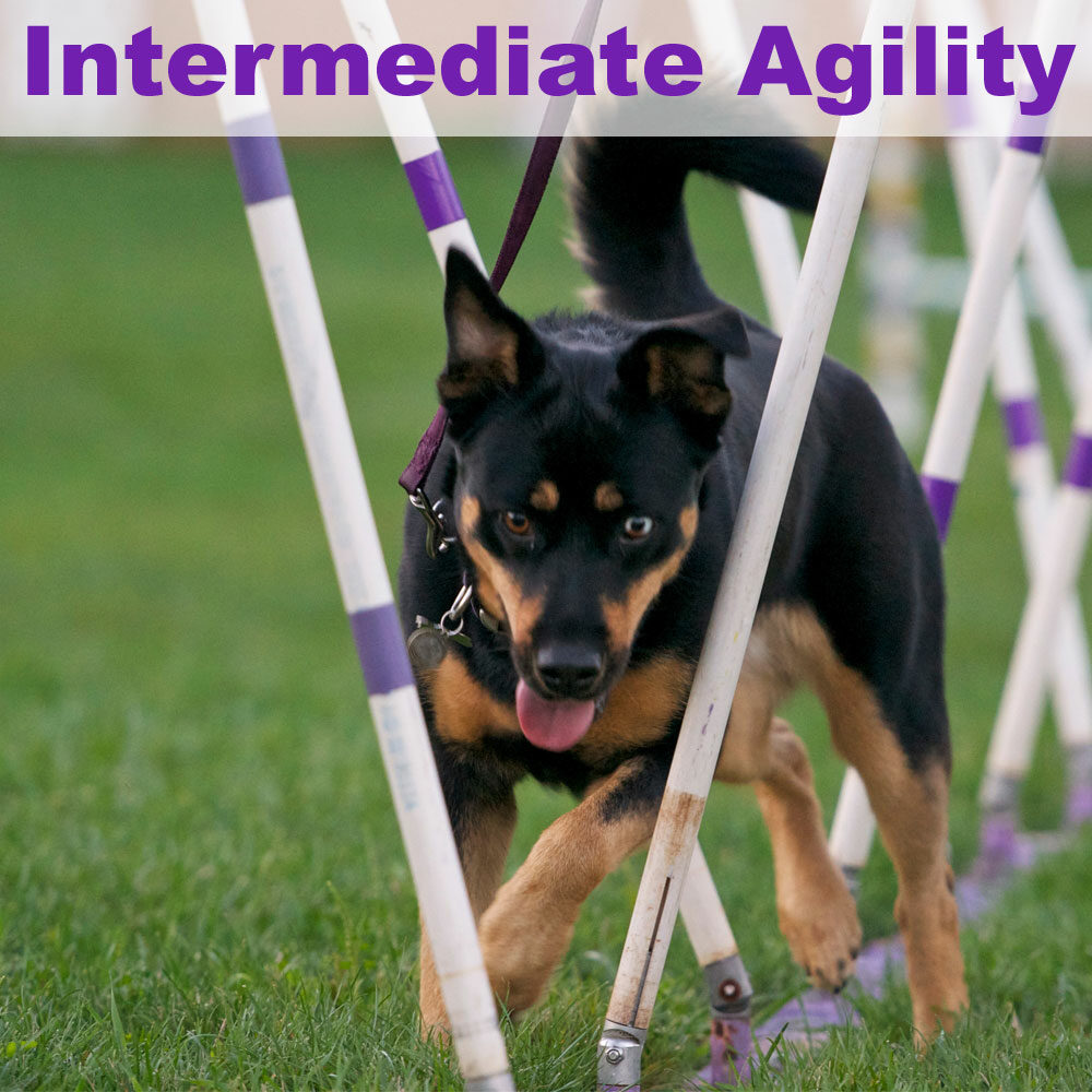 interagility